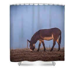 Donkey In The Fog Shower Curtain by Robert Bales