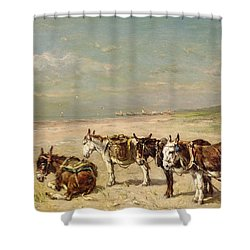Donkeys On The Beach Shower Curtain by Johannes Hubertus Leonardus de Haas