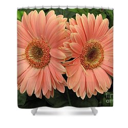 Double Delight - Coral Daisies Shower Curtain by Dora Sofia Caputo Photographic Art and Design