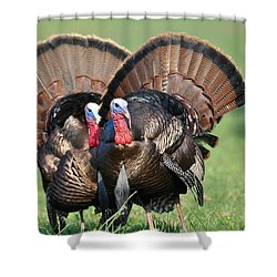 Double Trouble Shower Curtain by Todd Hostetter