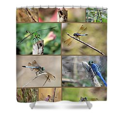 Dragonfly Collage 3 Shower Curtain by Carol Groenen
