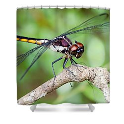 Dragonfly Shower Curtain by Dawna  Moore Photography