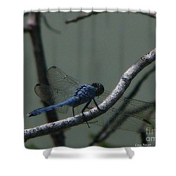 Dragonfly Shower Curtain by Greg Patzer