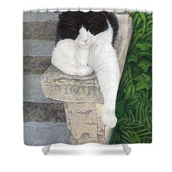 Dreaming Of Stone Lions Shower Curtain by Pat Erickson