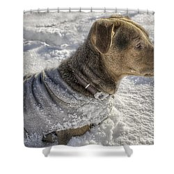 Dressed For The Snow Shower Curtain by Jason Politte