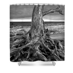 Driftwood On Jekyll Island Black And White Shower Curtain by Debra and Dave Vanderlaan