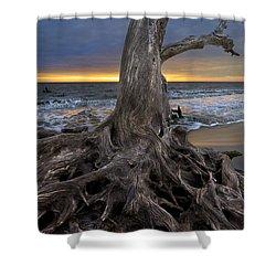 Driftwood On Jekyll Island Shower Curtain by Debra and Dave Vanderlaan