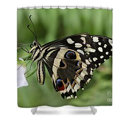 Drinks With A Giant  Swallowtail Shower Curtain by Ruth Jolly