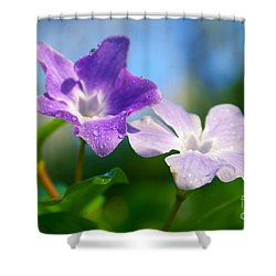 Drops On Violets Shower Curtain by Carlos Caetano