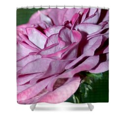 Dusty Rose Shower Curtain by Barbara S Nickerson