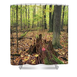 Early Autumn Woods Shower Curtain by Michele Steffey