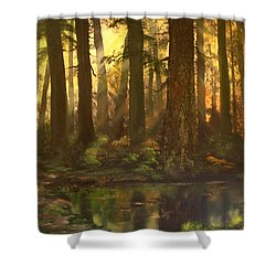 Early Morning Sun On Cannock Chase Shower Curtain by Jean Walker