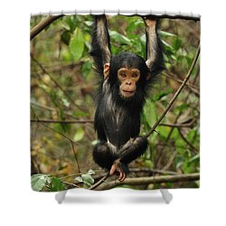 Eastern Chimpanzee Baby Hanging Shower Curtain by Thomas Marent