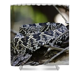 Eastern Diamondback-1 Shower Curtain by Rudy Umans