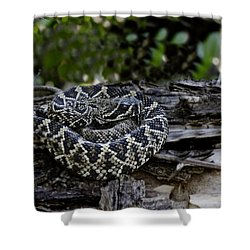 Eastern Diamondback-2 Shower Curtain by Rudy Umans