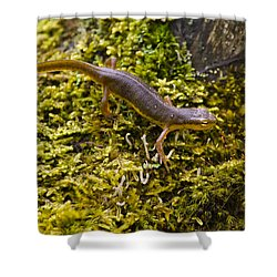 Eastern Newt Aquatic Adult Shower Curtain by Christina Rollo