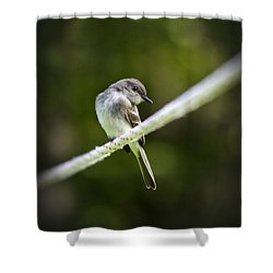 Eastern Phoebe Shower Curtain by Christina Rollo