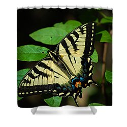 Eastern Tiger Swallowtail Shower Curtain by Bianca Nadeau