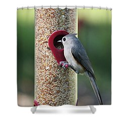 Eastern Tufted Titmouse  Shower Curtain by Carol Groenen