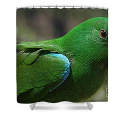 Eclectus Roratus Shower Curtain by Sharon Mau