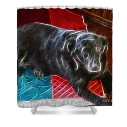Electrostatic Dog And Blanket Shower Curtain by Barbara Griffin