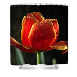 Elegance Of Spring Shower Curtain by Karen Wiles