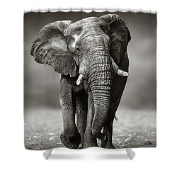 Elephant Approach From The Front Shower Curtain by Johan Swanepoel