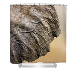 Elephant Ear Close-up Shower Curtain by Johan Swanepoel