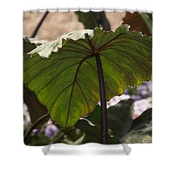 Elephant Ear Shower Curtain by James Peterson