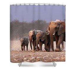 Elephant Herd Shower Curtain by Johan Swanepoel