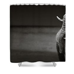 Elephants Interacting Shower Curtain by Johan Swanepoel