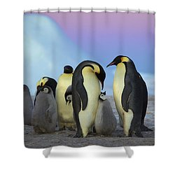 Emperor Penguin Parents And Chick Shower Curtain by Frederique Olivier