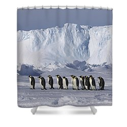 Emperor Penguins Walking Antarctica Shower Curtain by Frederique Olivier