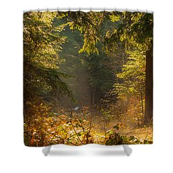 Enchanted Forest Shower Curtain by Evgeni Dinev