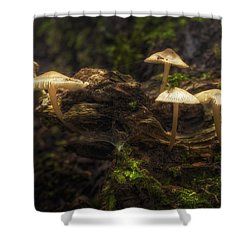 Enchanted Forest Shower Curtain by Scott Norris