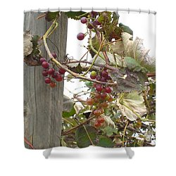 End Of Season Grapes Shower Curtain by Jennifer E Doll