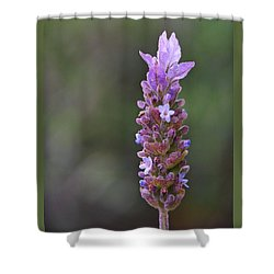 English Lavender Shower Curtain by Rona Black