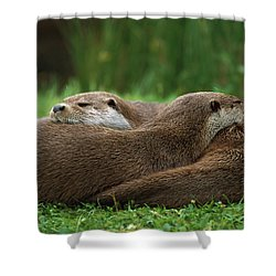European River Otter Lutra Lutra Shower Curtain by Ingo Arndt