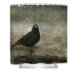 European Starling Shower Curtain by Cindi Ressler