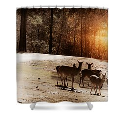 Evening Social  Shower Curtain by Kim Henderson