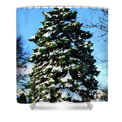 Evergreen In Winter Shower Curtain by Susan Savad