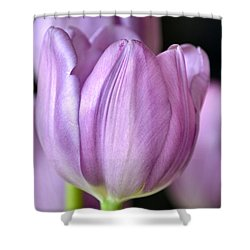 Everlasting Shower Curtain by Deb Halloran