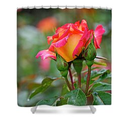 Eye Candy Shower Curtain by Rona Black