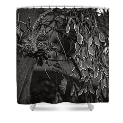 Face In The Maple Tree 2 Shower Curtain by Leana De Villiers