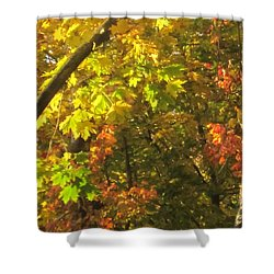 Fall Abstract 2 Shower Curtain by Tara  Shalton