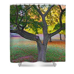 Fall Color Shower Curtain by Lisa Phillips