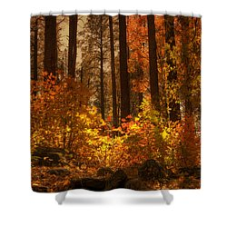 Fall Forest  Shower Curtain by Saija  Lehtonen
