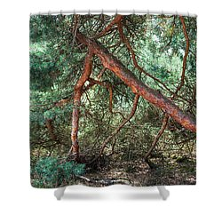 Falling Pine Tree In Veluwe National Park. Netherlands. Shower Curtain by Jenny Rainbow