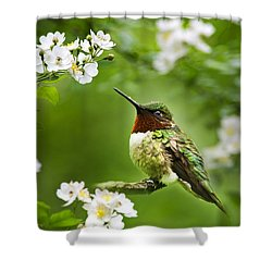 Fauna And Flora - Hummingbird With Flowers Shower Curtain by Christina Rollo