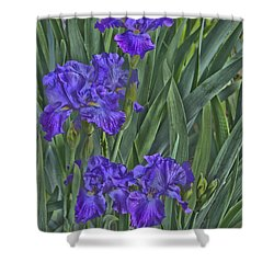 Faux Painted Irises Shower Curtain by Penny Lisowski